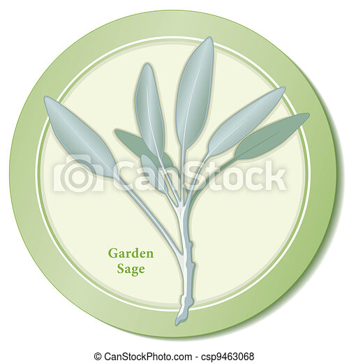 Garden Sage Herb Icon - csp9463068
