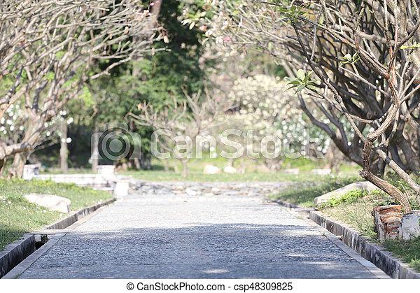 Calles y caminos en el jardín de flores. - csp48309825
