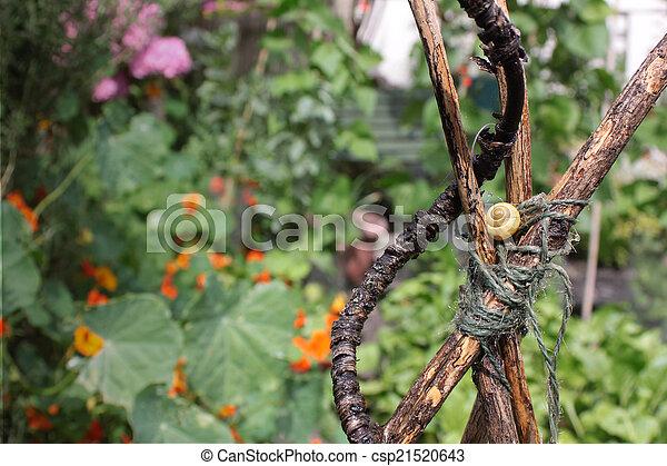 Garden Snail - csp21520643