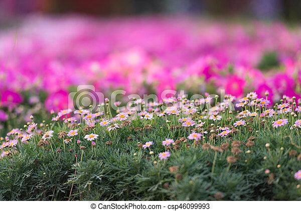 Garden - csp46099993