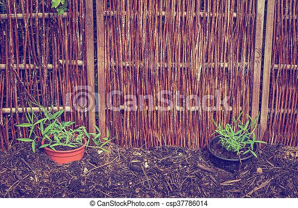Garden with green plants - csp37786014