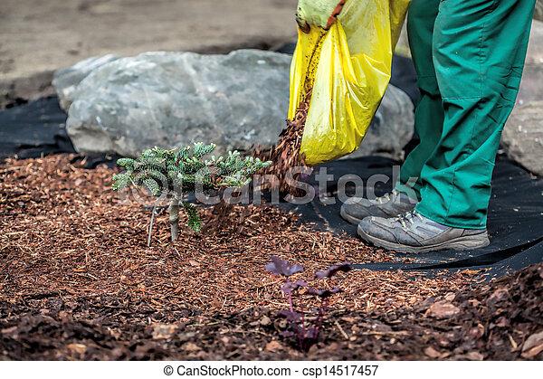 Gardener spills mulch under bush - csp14517457
