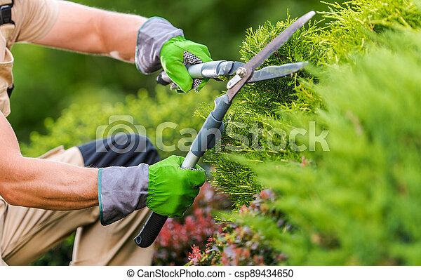 Gardener Trimming Plants Using Garden Scissors - csp89434650