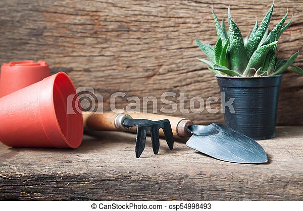 Gardener's desk with Cactus plant, Hobby and lifestyle concept - csp54998493