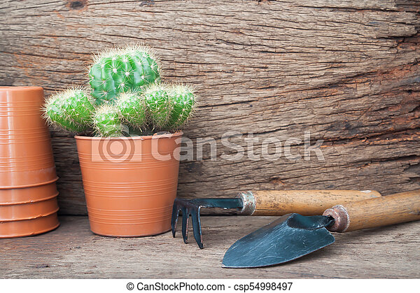 Gardener's desk with Cactus plant, Hobby and lifestyle concept - csp54998497