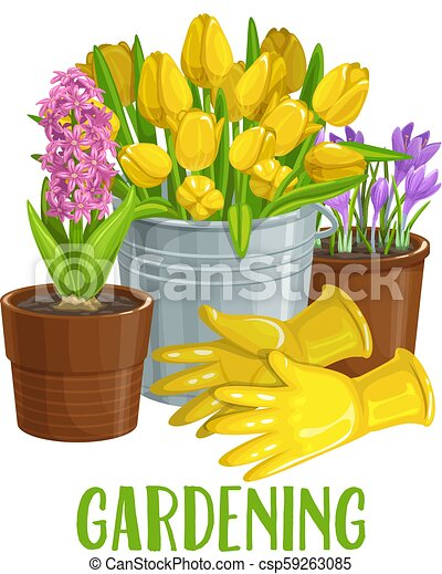 Gardening Banner With Flowers Vector Gardening Banner With Gloves Flowers In Pots Tulips Hyacinths And Crocus For Design