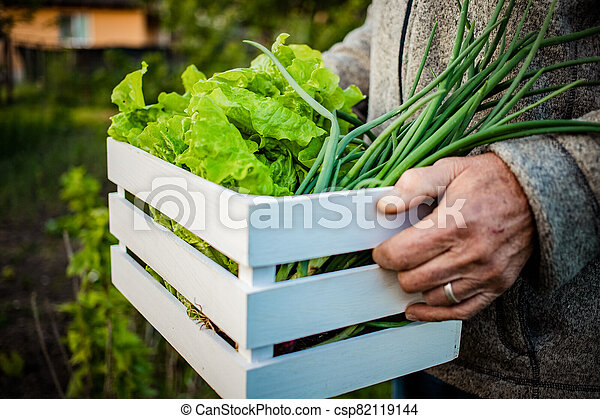 gardening man holding box with fresh lettuce and onions - csp82119144