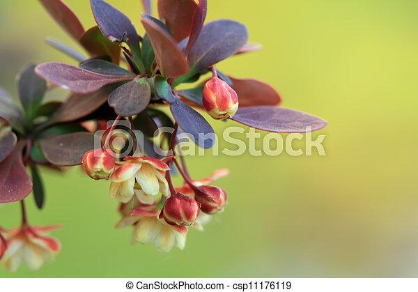 gardening nursery stock flowers in a park - csp11176119