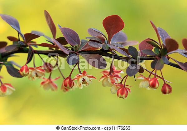 gardening nursery stock flowers in a park - csp11176263