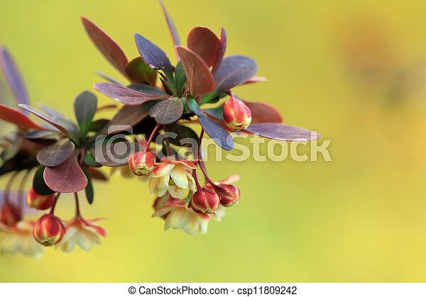 gardening nursery stock flowers in a park - csp11809242