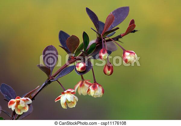 gardening nursery stock flowers in a park - csp11176108