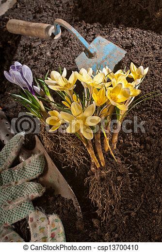 gardening - csp13700410
