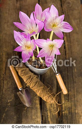 Gardening - csp17702119