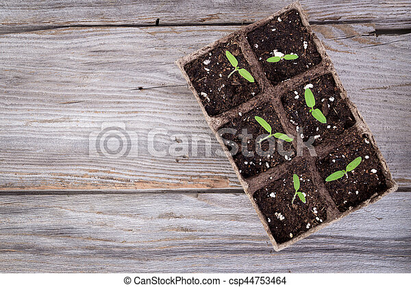 gardening square organic planting pots with tomato plant sprout - csp44753464