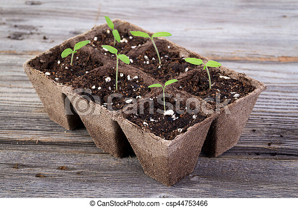 gardening square organic planting pots with tomato plant sprout - csp44753466