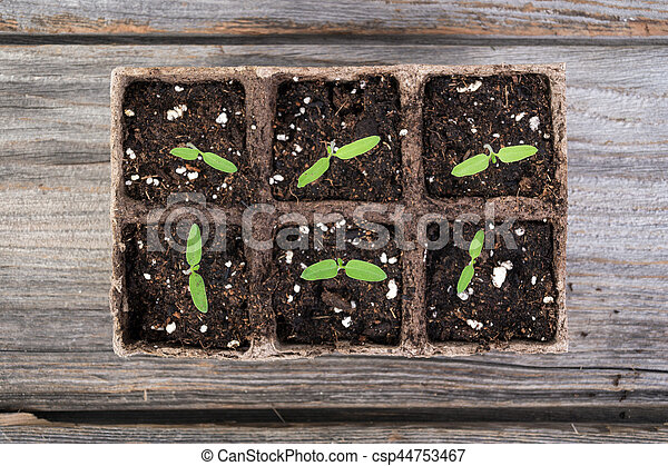 gardening square organic planting pots with tomato plant sprout - csp44753467