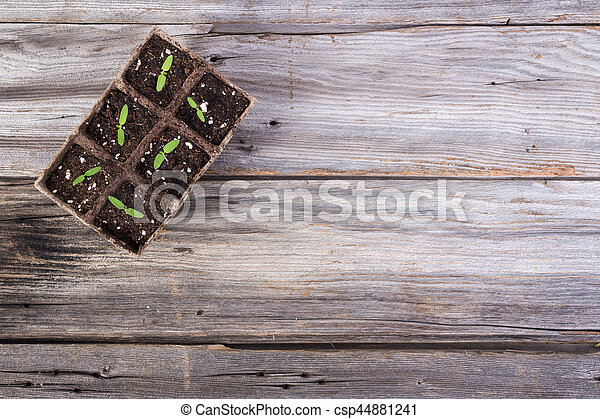 gardening square organic planting pots with tomato plant sprout - csp44881241