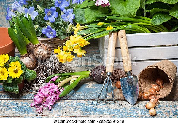 Gardening - csp25391249