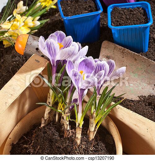 gardening - csp13207190