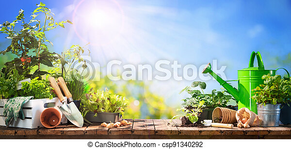 Gardening tools and seedlings on wooden table outdoors - csp91340292