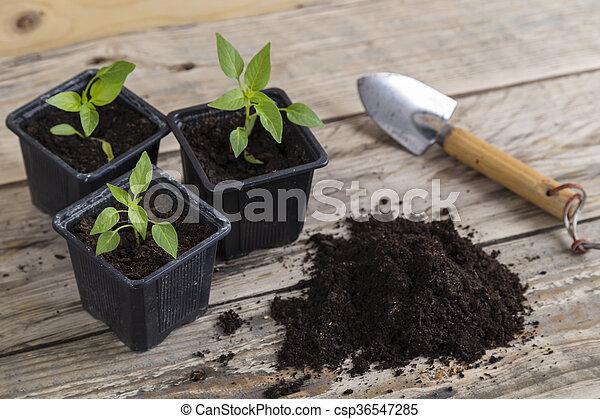 Gardening trowel with plants - csp36547285