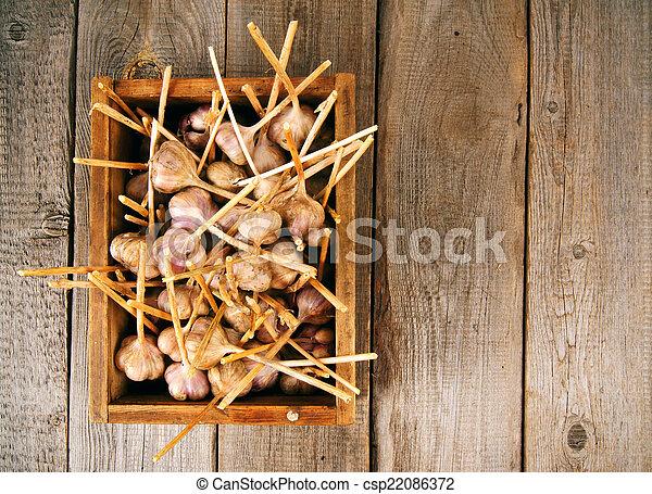 Garlic in a box - csp22086372