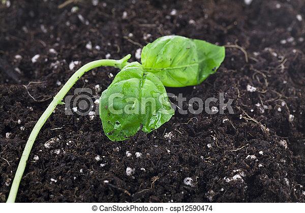 Grüne Pflanze und Erde - csp12590474