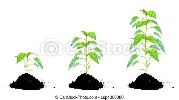 gartenerde, pflanze, grün - csp4300080