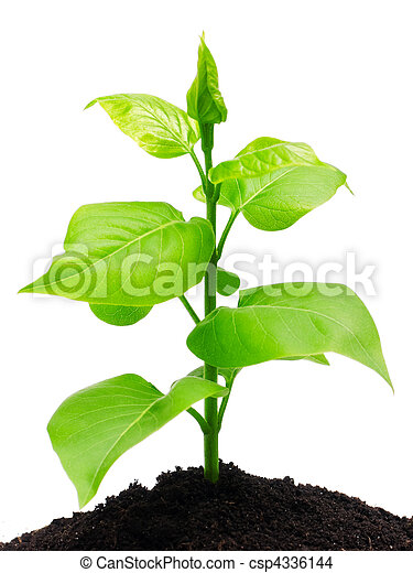 gartenerde, pflanze - csp4336144