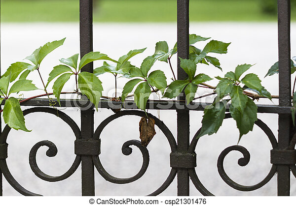 gate with ivy - csp21301476