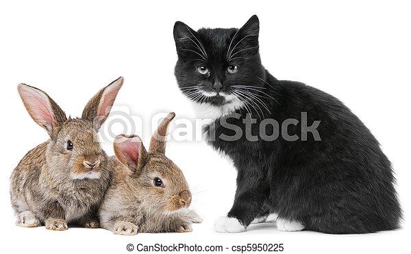 Gato gatito y conejito - csp5950225