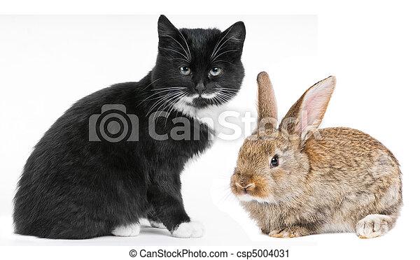 Gato gatito y conejito - csp5004031