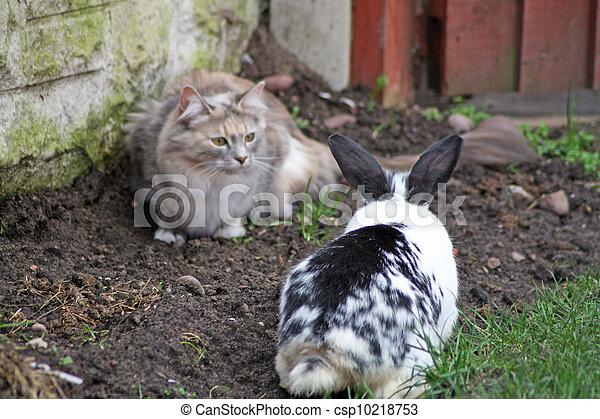 Gato y conejo - csp10218753
