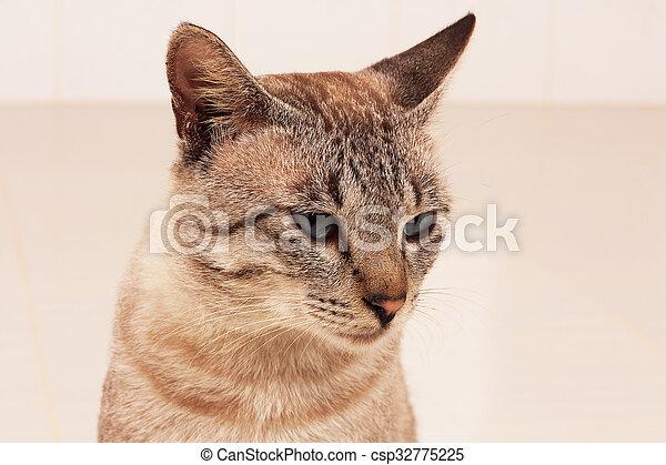 Lindo gato gris en la habitación - csp32775225