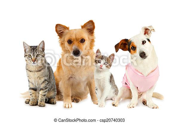 gatos, grupo, cachorros - csp20740303