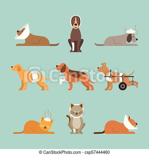 Los gatos y los perros se enferman - csp57444460