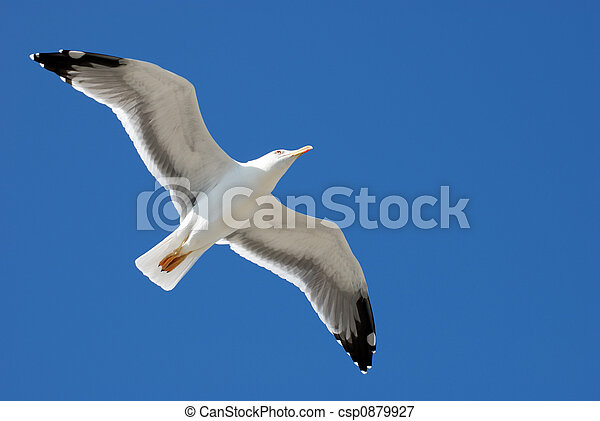 Seagull - csp0879927