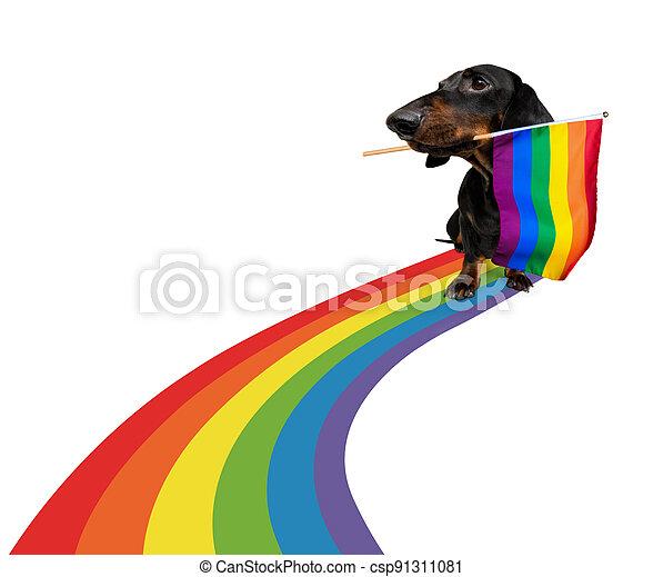gay pride dog - csp91311081