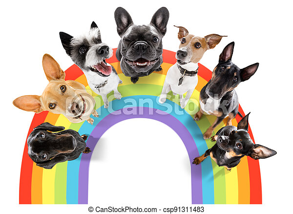 gay pride dog - csp91311483