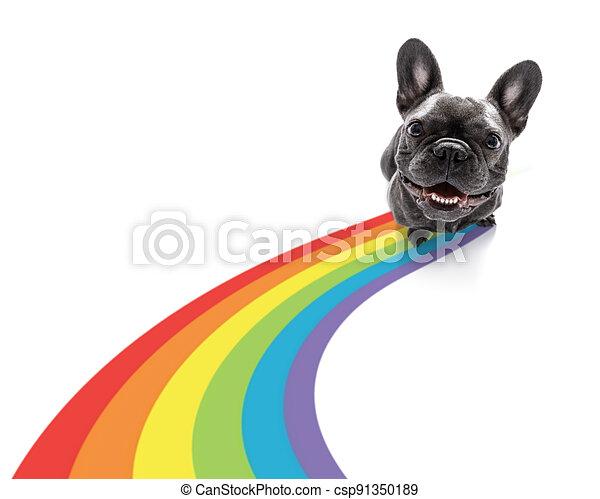 gay pride dog - csp91350189