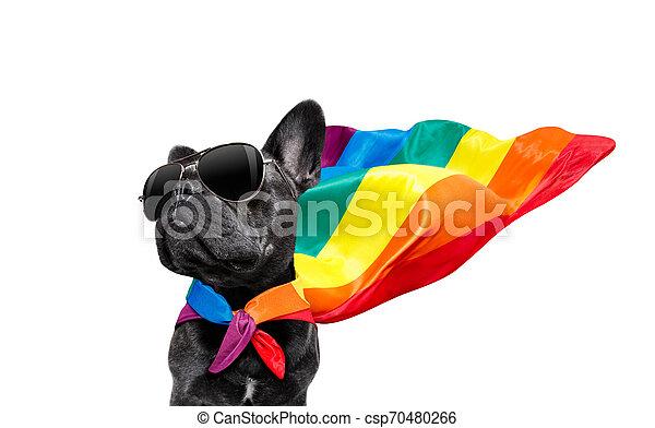 gay pride dog - csp70480266