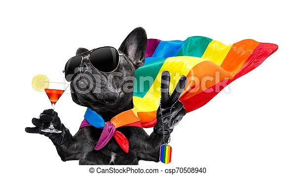 gay pride dog - csp70508940