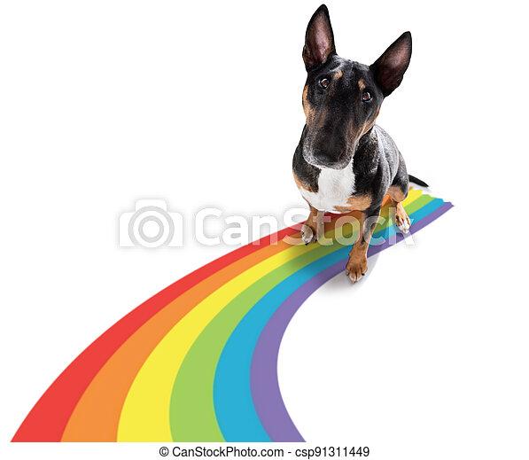 gay pride dog - csp91311449