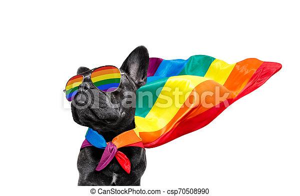 gay pride dog - csp70508990