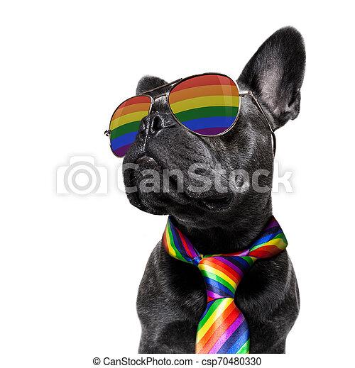 gay pride dog - csp70480330
