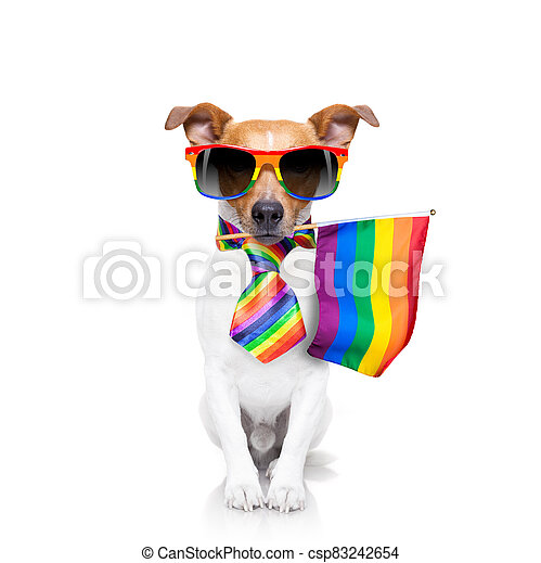 gay pride dog  with rainbow flag - csp83242654
