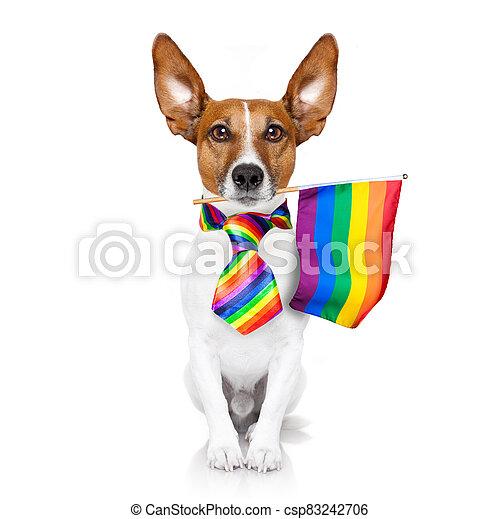 gay pride dog  with rainbow flag - csp83242706