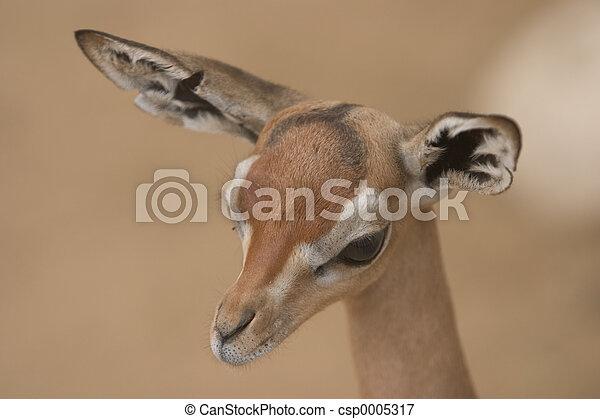 Gazelle/Antelope - csp0005317