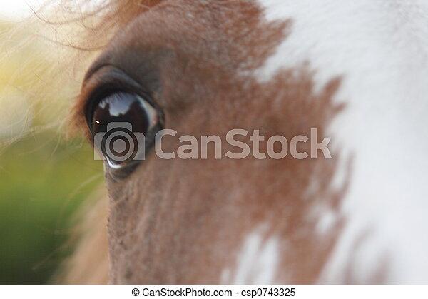 geïnspireerde, paarde - csp0743325