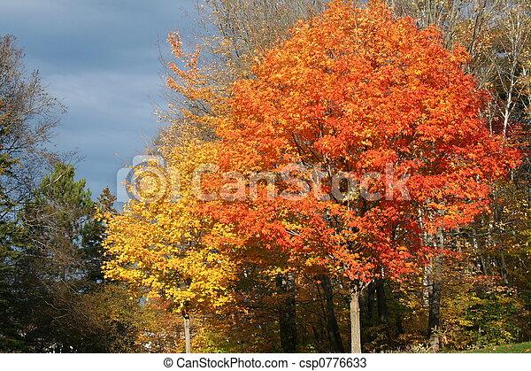 gebladerte, herfst - csp0776633